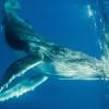 BCATW Buzz jett whale horiz