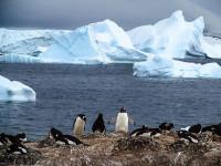 Penguins and Icebergs - Antarctica