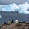 Penguins and Icebergs - Antarctica