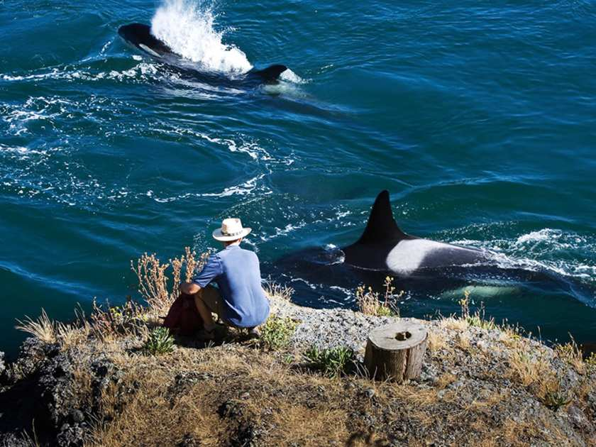 travel cover whale-watching-at-galiano-karoline-cullen-photo1