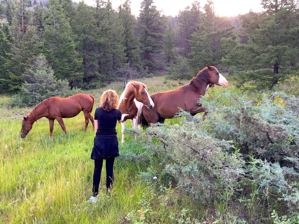Staley.horses.BUZZ