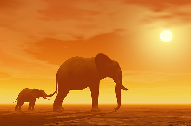 elephants-bestway